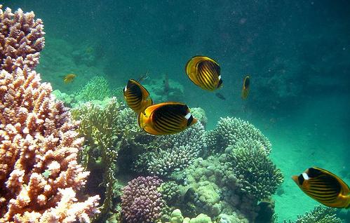 Soggiorno Sharm El Sheikh – Le Balze Viaggi